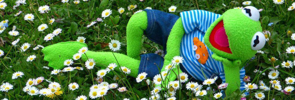 Kikker die relaxed in het gras ligt - symbool voor de Walkshops