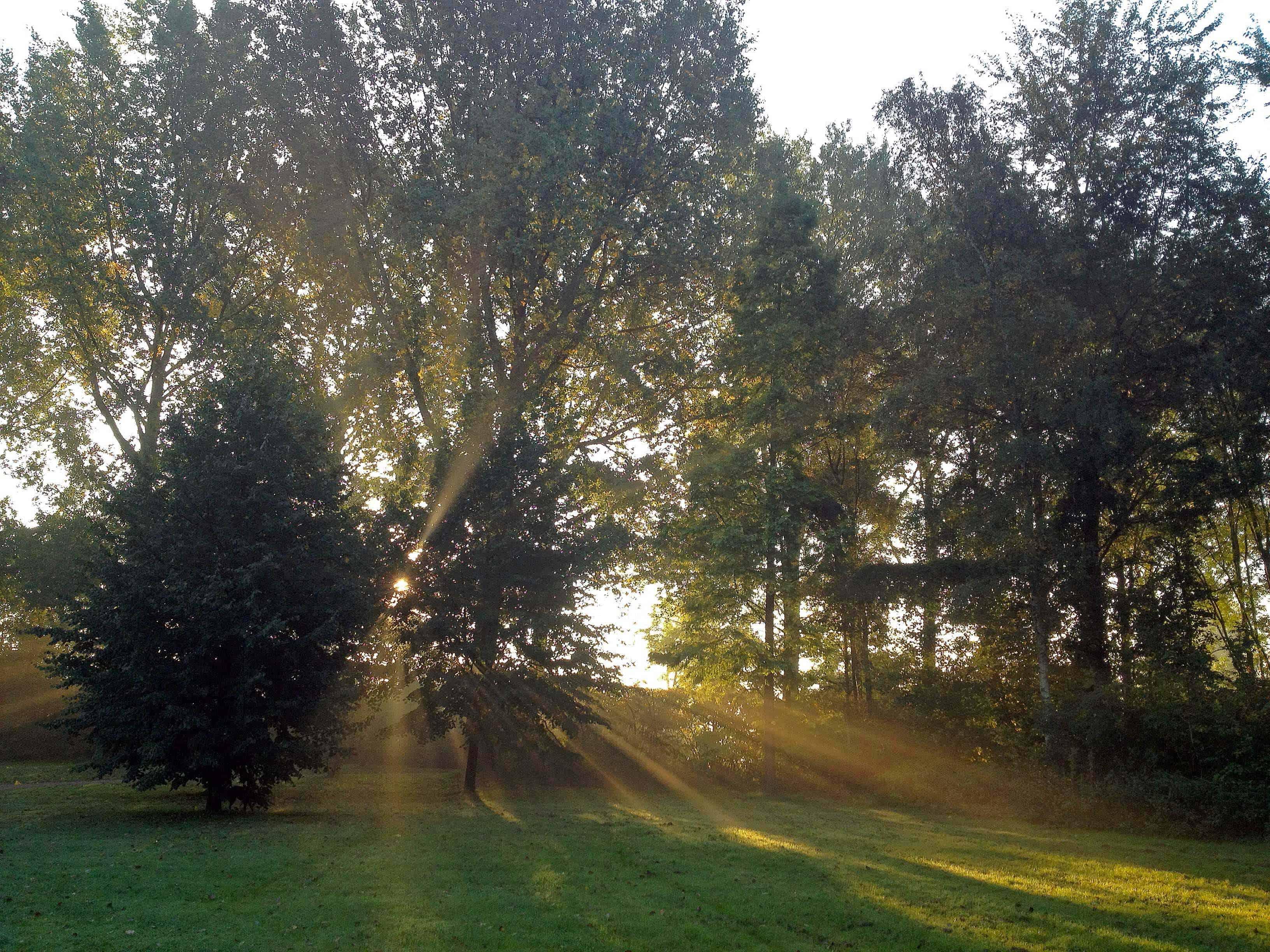 Zonnestralen schijnen door de bomen op het gras tijdens mindful wandelen