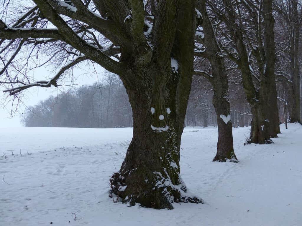 boom in winters landschap tijdens winterwandeling