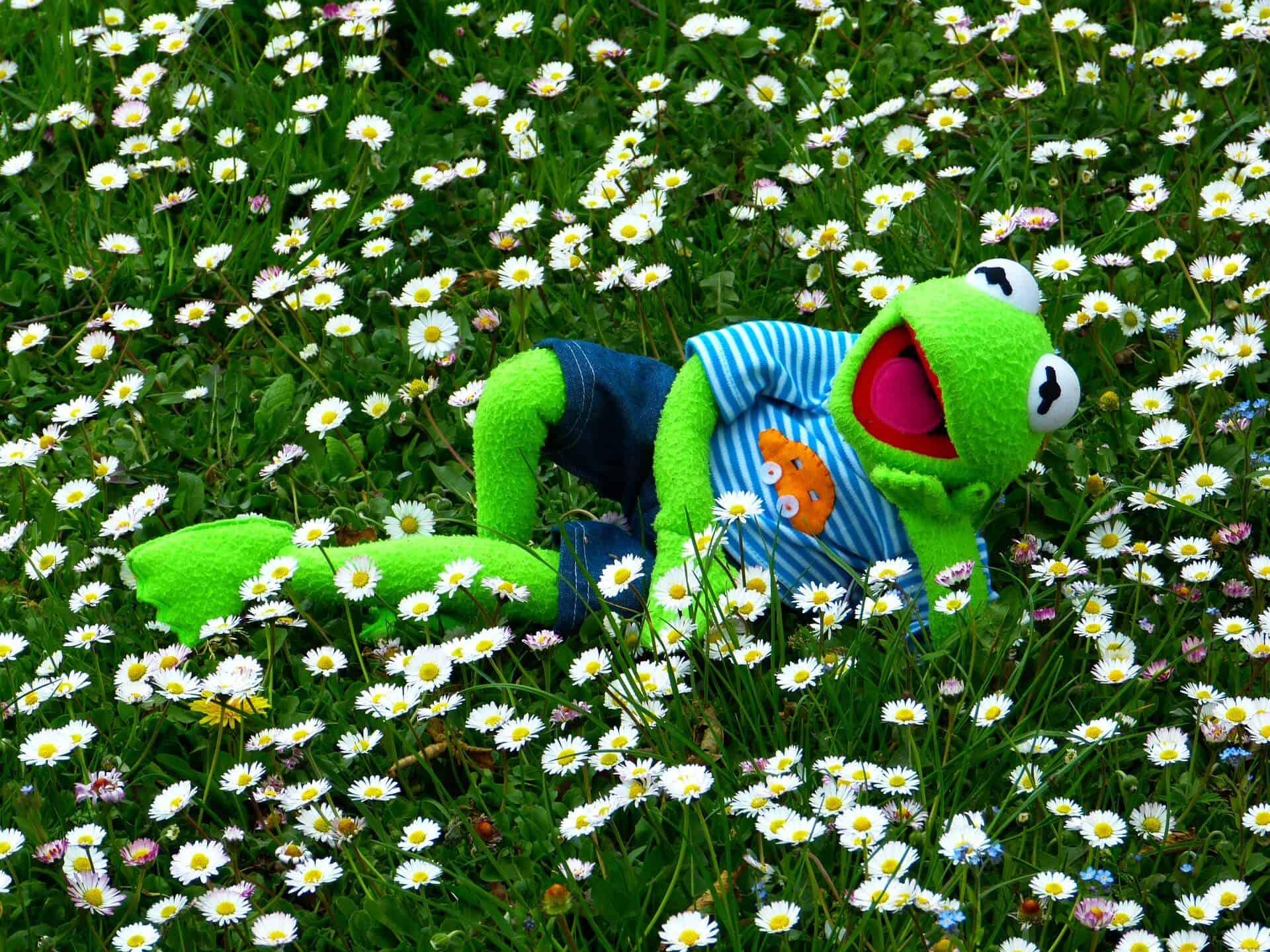 kikker liggend in het gras