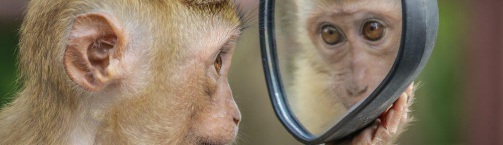 aapje kijkt in de spiegel